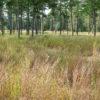 Conservation Reserve Mix