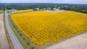 large acreage seeding