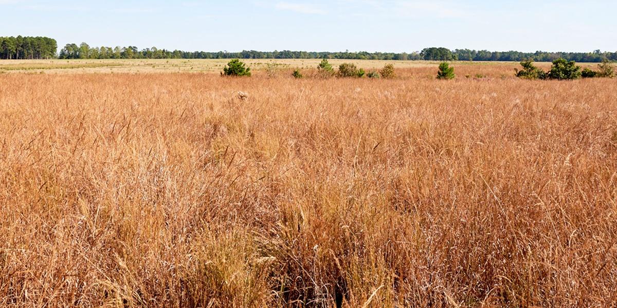 Garrett Wildflower Seed Farm Family Owned North Carolina