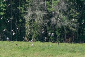 Doves Over Croton
